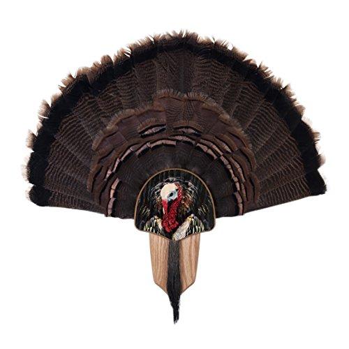 (Walnut Hollow Country Turkey Fan Mount & Display Kit, Oak with Turkey Profile Image)