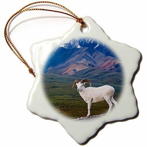 Vehfa Snowflake OrnamentAK Denali, Dall Sheep Wildlife, Polychrome Pass US JGI Jerry Ginsberg Snowflake ()
