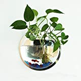 Candyqueen 1Pcs Creative Acrylic Planter Hanging Pot Wall-mounted - Best Reviews Guide