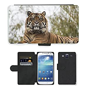 Super Stella Cell Phone Card Slot PU Leather Wallet Case // M00148889 Tiger Animal Wild Zoo Wildlife // Samsung Galaxy S3 S III SIII i9300