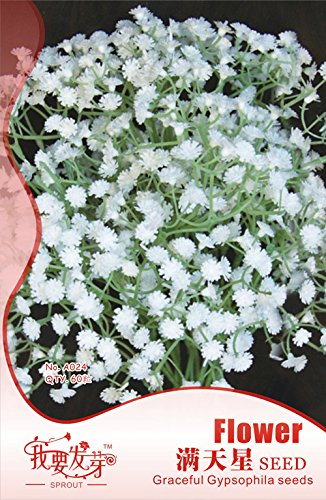2018 Hot Sale!! 10 Original Packs, 60 Seeds/Pack, Gypsophila Snowflake Seeds, White Baby's Breath Seeds Perennial Florists Filler #NF189 (Babys Breath Florist)
