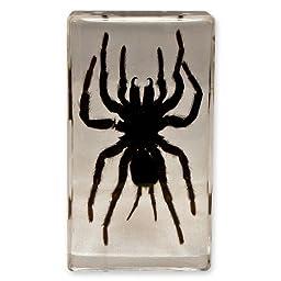 Tarantula Display in Acrylic Paperweight