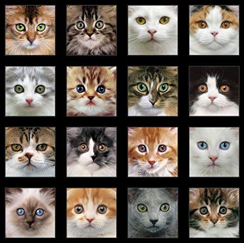"Elizabeth's Studio 24"" Fabric Panel Adorable Pets Cat Face Blocks Black"