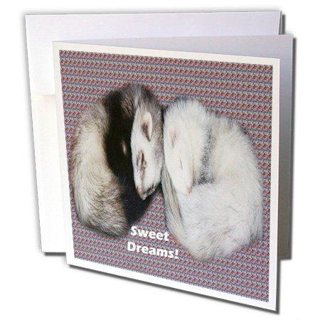 (Sleeping Ferrets - Greeting Card, 6 x 6 inches, single (gc_17286_5))