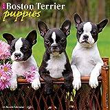 Just Boston Terrier Puppies 2021 Wall Calendar (Dog Breed Calendar)