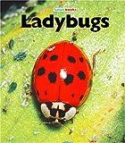 Ladybugs, M. C. McBee, 1567669794