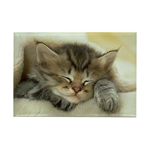 (CafePress Sleeping Kitty Rectangle Magnet, 2