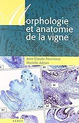 Morphologie et anatomie de la vigne