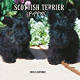 Scottish Terrier Puppies 2008 Mini Wall Calendar (German, French, Spanish and English Edition)