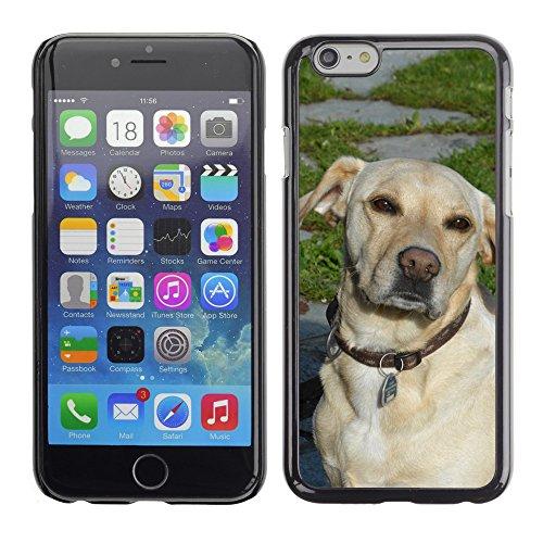 """Just Phone Cases Hard plastica indietro Case Custodie Cover pelle protettiva Per // M00127931 Chien Museau Head Pet animale // Apple iPhone 6 PLUS 5.5"""""""