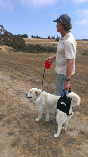 dog-lift-support-harness-airlift-one-medium-walkabout-support-sling