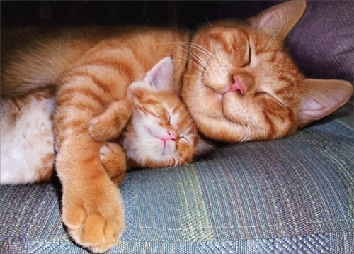 Napping Mom Cat & Kitten - Avanti Mother's Day Card