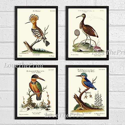 Bird Print Set of 4 Prints Antique Beautiful Kingfisher Ibis Hoopoe Malachite Kingfisher Tree Branch Bee Green Leaves Home Room Decor Wall Art Unframed CTB