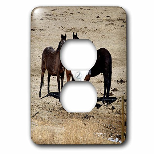 3dRose TDSwhite – Horse Equine Photos - Pasture Trio Three Horses - Light Switch Covers - 2 plug outlet cover ()