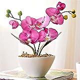 super1798 10Pcs Mix Color Phalaenopsis Flower Seeds Butterfly Orchid Garden Bonsai Plant