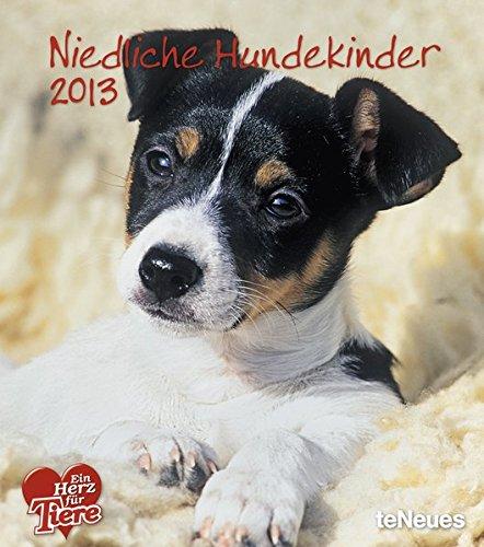 Niedliche Hundekinder 2013