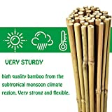 Mininfa Natural Bamboo Stakes 2
