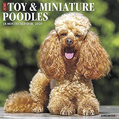 Just Toy Miniature Poodles 2020 Calendar Amazoncouk