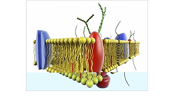 Impresión fotográfica de membrana celular, obras de arte ...