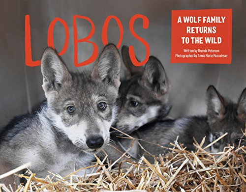 Lobos: A Wolf Family Returns to the Wild