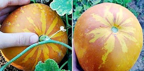 100 graines MUSC DOUX MELON /& Aromatique FRUITS THAI H/ÉRITAGE