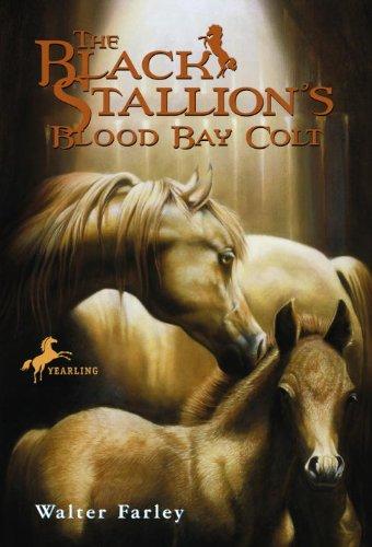 Action Harness (The Black Stallion's Blood Bay Colt)