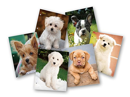 New Generation - Puppies - 2 Pocket Folder / Portfolio Heavy Duty 3 Hole Punch - Assorted 6 Fashion Designs UV Glossy Laminated - 6 Folders per Pack
