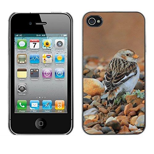 Premio Sottile Slim Cassa Custodia Case Cover Shell // F00007356 des oiseaux // Apple iPhone 4 4S 4G