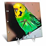 Cheap 3dRose dc_929_1 Budgie Parakeet Desk Clock, 6 by 6-Inch