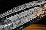 • Bella-gems • 6.5'' ''Ancient Life''~Morocco ORTHOCERAS FOSSIL Rare Specimen //Double Chambers//Energy Amplifies - K1072