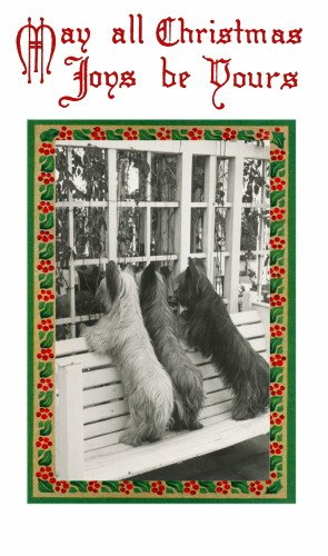 Vintage Christmas Art~Three Skye Terrier Puppy Dogs Looking in Window from Outside Bench~6 pack NEW Matte Vintage Picture Large Blank Note Cards with Envelopes
