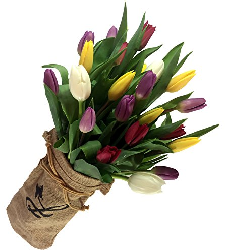 HandWrapped Tulip Bouquet by Plaza Flowers - Fresh Flowers Hand Delivered - Philadelphia Area