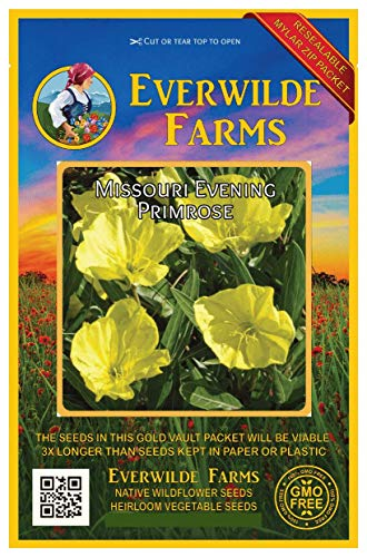 Everwilde Farms - 400 Missouri Evering Primrose Native Wildflower Seeds - Gold Vault Jumbo Seed Packet - Primrose Farm