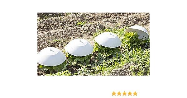 PAMPOLS Caja de 50 Sombreros Protectores para escarola 30 cm ...