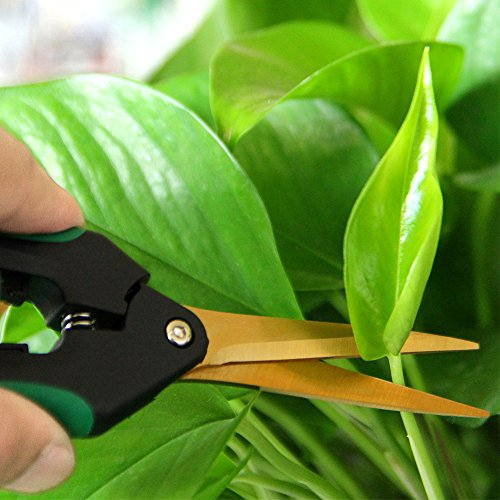 Review LDK Bypass Pruning Shears,