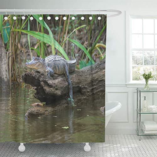 - Semtomn Shower Curtain Tour Green Louisiana Honey Island Swamp American Alligator Bayou Shower Curtains Sets with 12 Hooks 72 x 78 Inches Waterproof Polyester Fabric