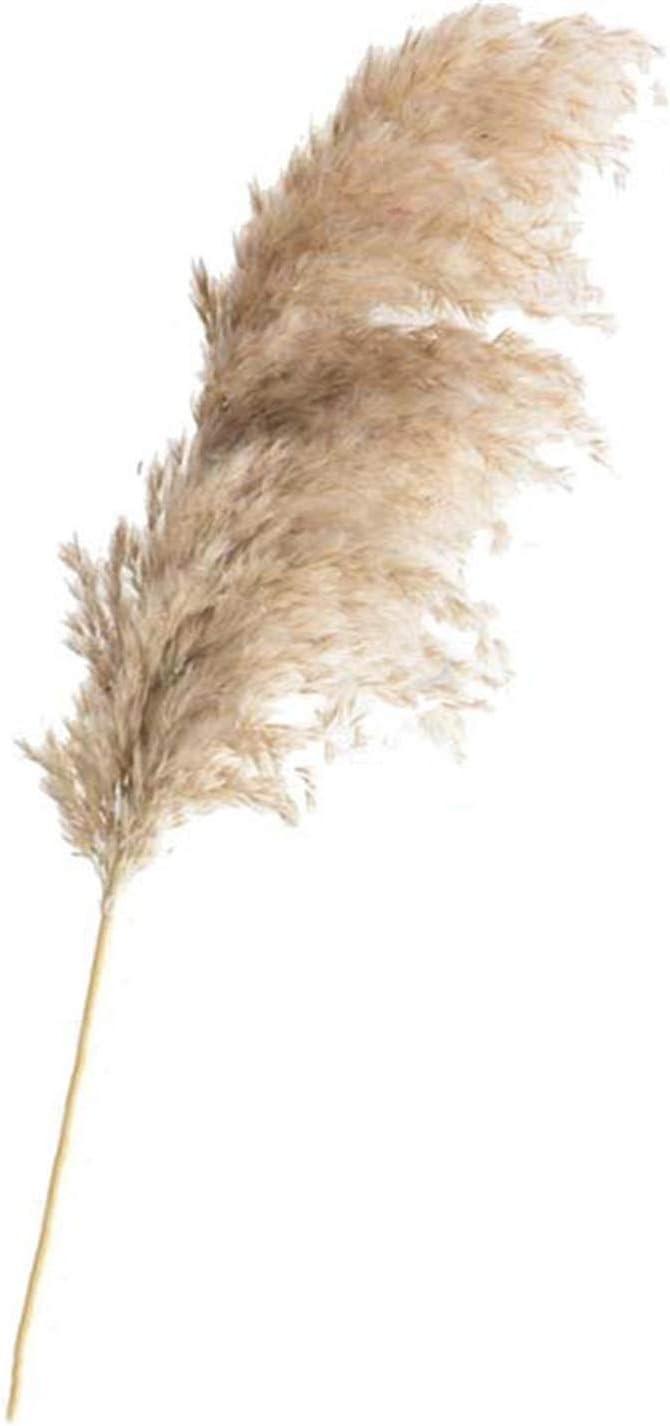 Amazon.com: Fashion nan Home Decoration 20pcs Wedding Flower Bunch Pampas Grass Large Plume 40-50cm Dried Reed Plants Natural phragmites communis-20pcs raw Color-M: Home Improvement