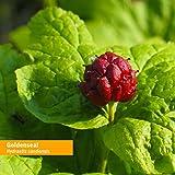 Herb Pharm Certified Organic Goldenseal Liquid