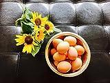 Notti Farm 6 Premium Chicken Hatching Eggs, Fertile Chicken Eggs, Live Hatching Eggs, Fertile Eggs, Free Range Chicken Eggs, Barn Yard Mix, Rhode Island Reds, Goldens, Organic Pasture Fed Chickens, Made in TEXAS