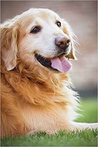 Happy Golden Retriever Dog Journal 150 Page Lined Notebook Diary Image Cool 9781539903536 Amazon Com Books
