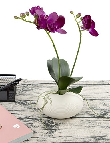 Rinlong Artificial Phalaenopsis Orchid Spray with Green Leaf Decorative Synthetic Silk Moth Orchid Flower for Wedding Home Office - Green Leaf Orchid