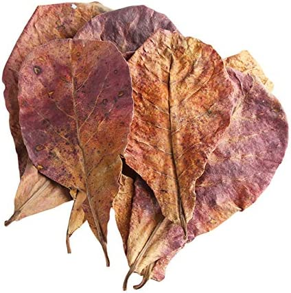 Amazon.com: Pukido 50g/Pack New Effective Natural Terminalia Catappa Foetida Leaves Island Almond Leaf for Fish Cleaning/Treatment Aquarium Tank - (Color: as Show, Size: M)