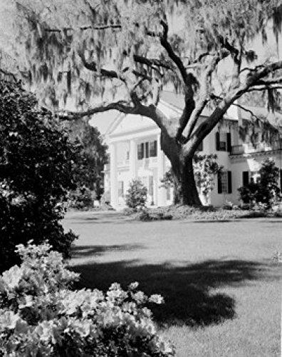 Usa North Carolina Wilmington Orton Plantation Home With Large Live Oak And Spanish Moss Poster Print  24 X 36