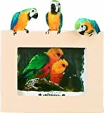 E&S Pets 35316-13 Small Bird Frames