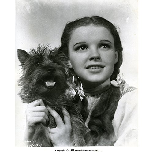 The Wizard of Oz Judy Garland as Dorothy Holding Toto 8 x 10 Inch Photo