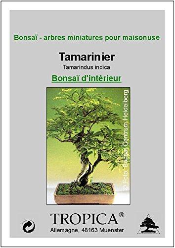 Tropica - Bonsai - Tamarinde (Tamarindus indica) - 4 Samen: Amazon ...