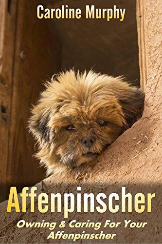 Affenpinscher: Owning & Caring For Your Affenpinscher