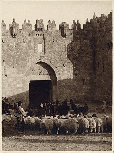 Flocking Sheep Before The Jerusalem Damascus Gate Poster Print (18 x 24)