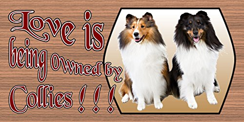 Love is Being Owned by Collies