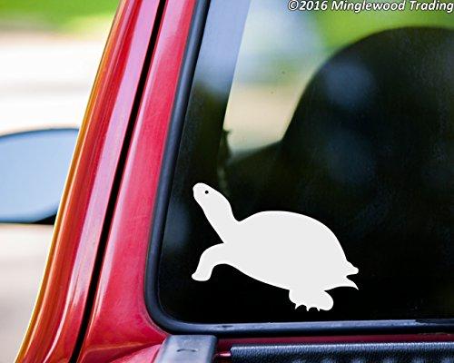 Tortoise 4 Light - 8